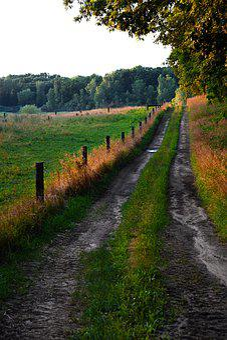 Path, Farm, Meadow, Grass, Landscape, Nature, Green