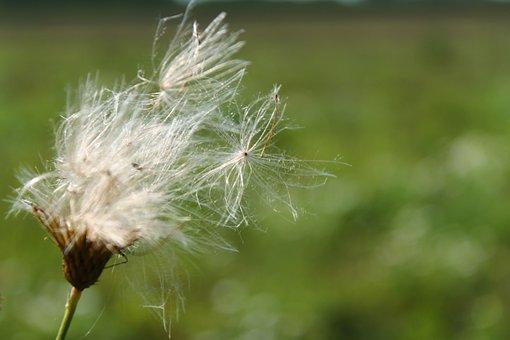 Nature, Landscape, Green, Flower, Wild Flower, Rest