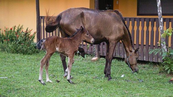 Marajó Island, Pará, Agro, Horses, Poltro, Pasture