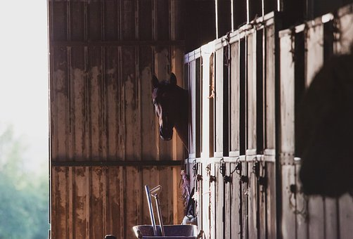 Horse In Stable, Stable, Horse, Equine, Summer, Outlook