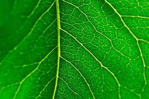 Green, Leaf, Veins, Texture, Pattern, Macro