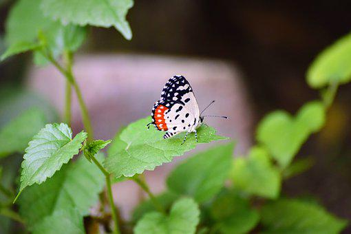 Butterfly, Nature, Insect, Summer, Wings, Butterflies