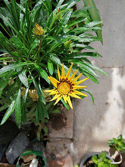 Yellow Flower, Flower, Floral, Nature, Yellow