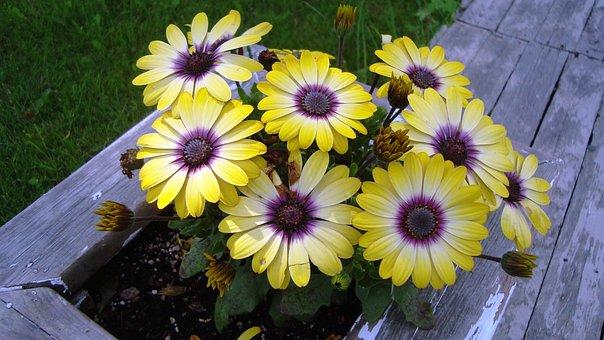 Flowers, Yellow, Garden, Deck, Flowerbed