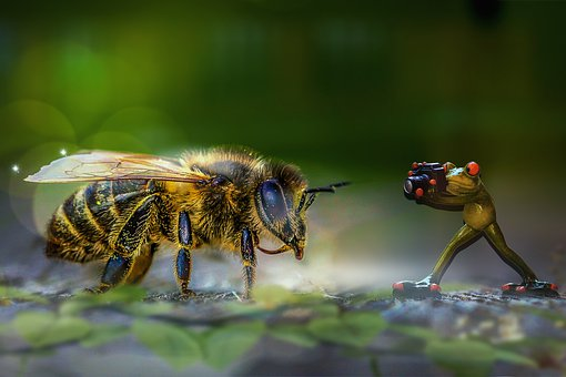 Manipulation, Frog, Bee, Insect, Nature, Branch