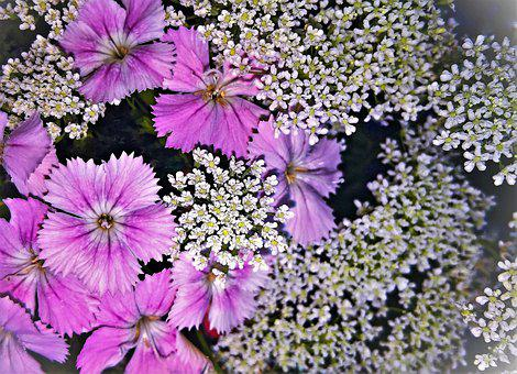 Flowers, Bart Cloves, Gypsophila, Bouquet