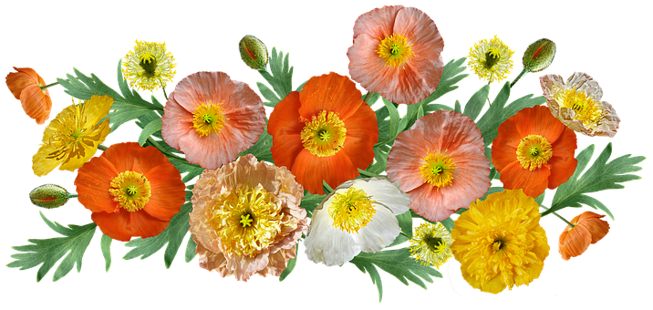 Flowers, Poppies, Arrangement, Cut Out, Isolated