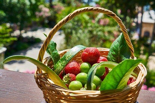 Strawberry, Basket, Erik, Spring, Summer, Fruit, Health