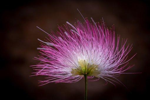 Blossom, Bloom, Flower, Tender, Flora