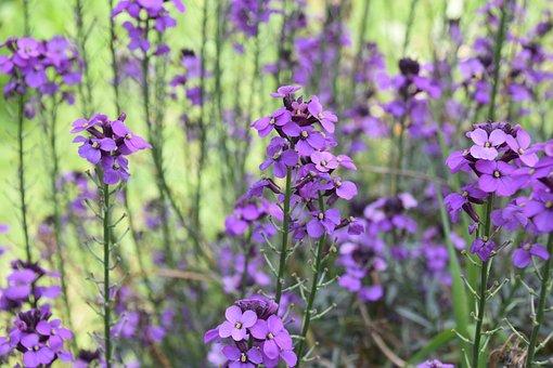 Flower, Flowers, Flowers Color Purple, Natural