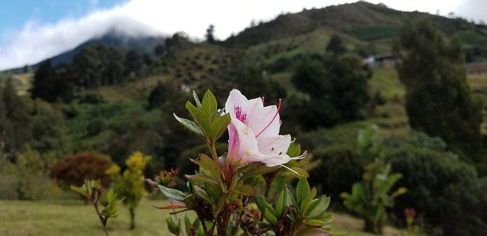 Pink, Flower, Mountain, Sky, Trees