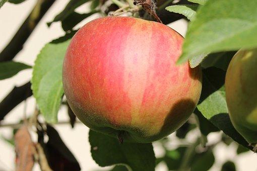 Apple, Elstar, Fruit, Red, Fresh, Delicious