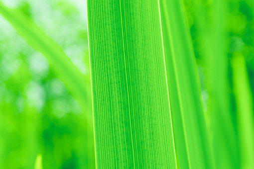 Green Leaf, Green, Leaves, Plant, Pattern, Texture