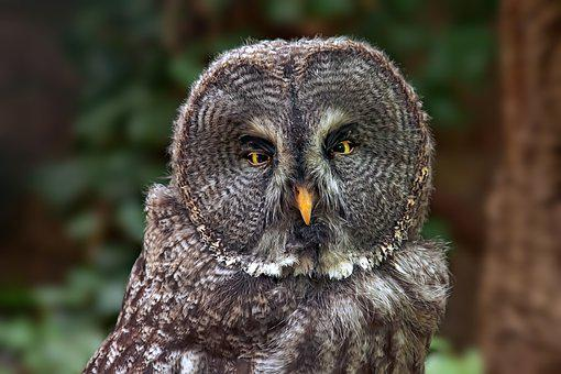 Owl, Bird, Eagle Owl, Forest, Nature, Animal World