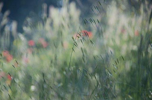 Plants, Nature, Green, Background, Summer, Spring