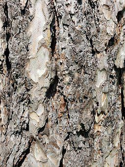 Tree, Bark, Rough, Texture, Nature, Forest, Wood, Trunk