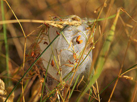 Cocoon, Hatching, Caterpillar, Nature, Nest, Web