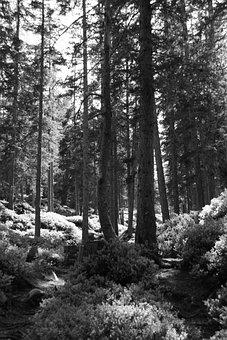 Forest, Trees, Nature, Landscape, Path, Secret, Scenic