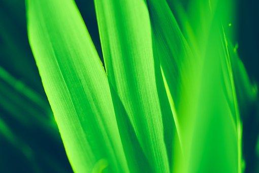 Green, Leaves, Texture, Pattern, Plant, Vivid Green