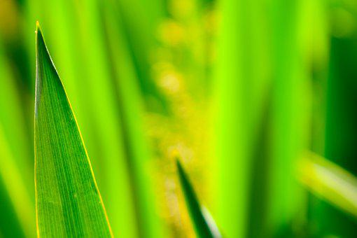 Green, Leaves, Macro, Plant