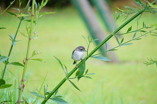 Bird, Tililit, Zoiso Blanc, Makes, Reunion Island