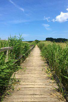 Away, Nature, Landscape, Trail, Summer, Rest, Reed