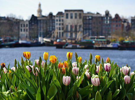Amsterdam, Tulip, Holland, Tulips, Flowers, Dutch