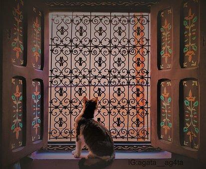 Cat Cats, Window, Art, Artistic, Travel, Traveler