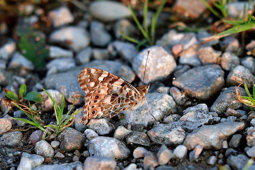 Butterfly, Wing, Close Up, Stones, Flight Insect