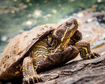 Turtle, Park, Nature, Animal, Tortoise, Wild, Summer