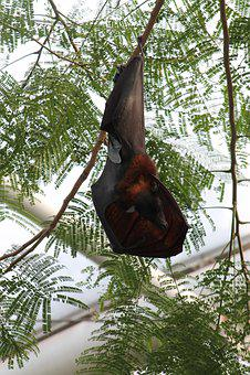 Bat, Hanging, Sleep, Mammal, Animal, Trees, High, Top