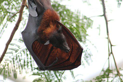 Bat, Zoo, Nature, Height, Hanging, Animal, Fluffy