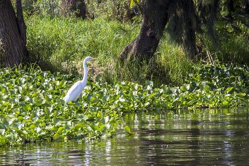 Nature, Animal, Wildlife, Bird, Fauna, Garden, Green