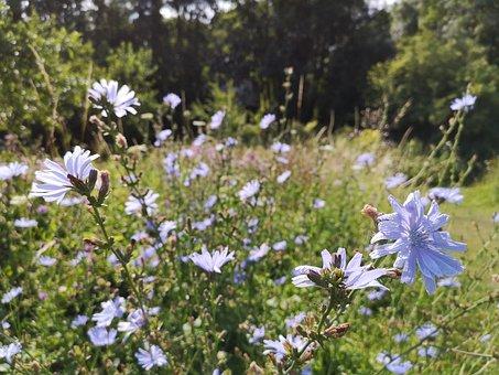 Flowers, Blue, Fields, Nature, Bucolic, Blur, Field