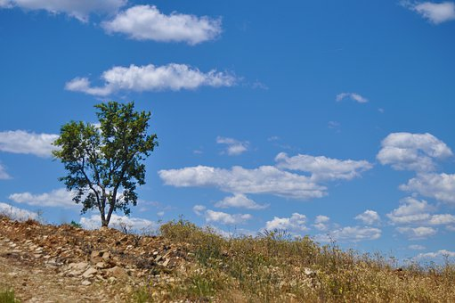 Tree, Clouds, Sunny, Landscape, Nature, Sky, Outdoors