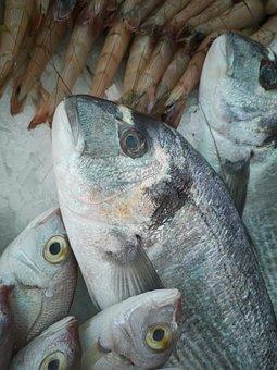 Fish, Market, Dead, Fresh, Food, Sunday, Healthy