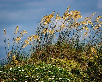 Beach, Grass, Landscape, Sea, Nature, Summer, Dunes