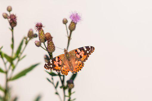 Butterfly, Nature, Insect, Animals, Flower, Wings