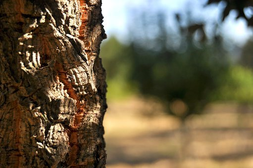 Tree, Bark, Nature, Forest, Wood, Old, Trunk, Alone
