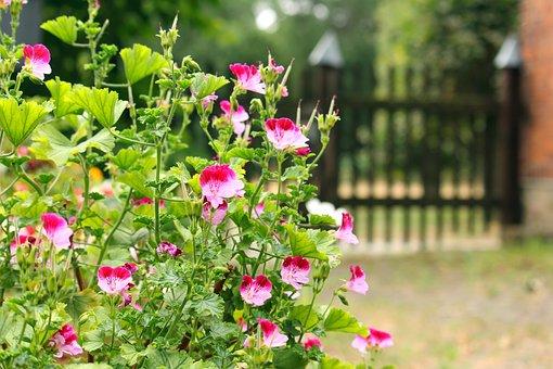 Garden, Garden Gate, Gate, Wood Fence, Garden Fence