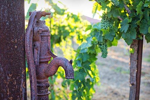 Water Pump, Antique, Grapes, Unripe, Unripened, Green