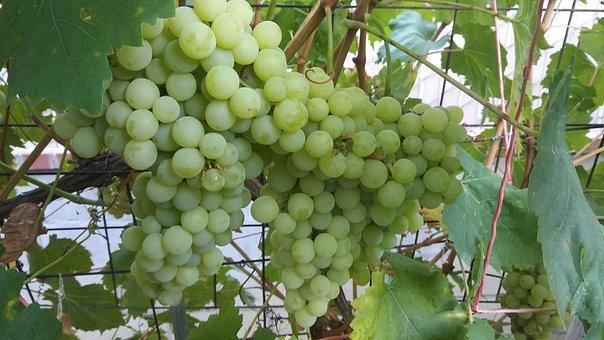 Harvest, Basket, Fruits, Nature, Organic, Thanksgiving