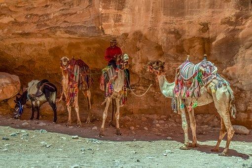 Camels, Donkey, Camelliers, Al Siq Canyon, Heat, Summer