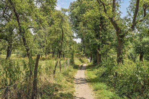 Tree, Nature, Pasture, Landscape, Wood, Idyllic, Mood