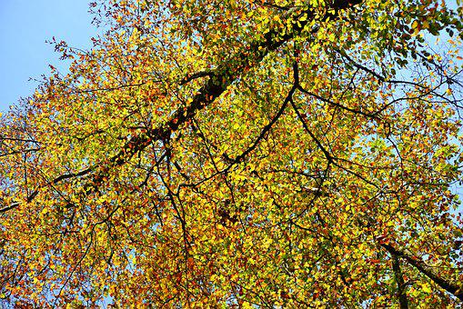 Trees, Fall Colors, Fur, Leaves, Colorful, Tree