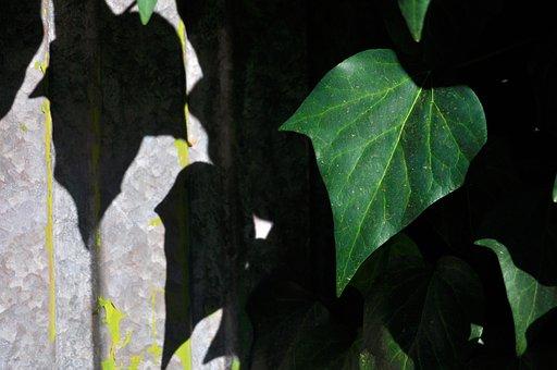 Ivy, Door, Old, Building, Wall, Facade, Gate, Metal