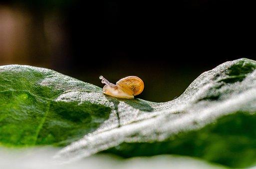 Snail, Gastropod, Petit, Cute, Nature, Animal, Move