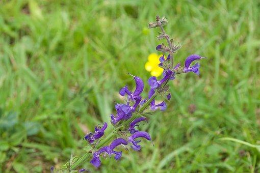 Purple Flower, Meadow, Summer Flowers, Violet