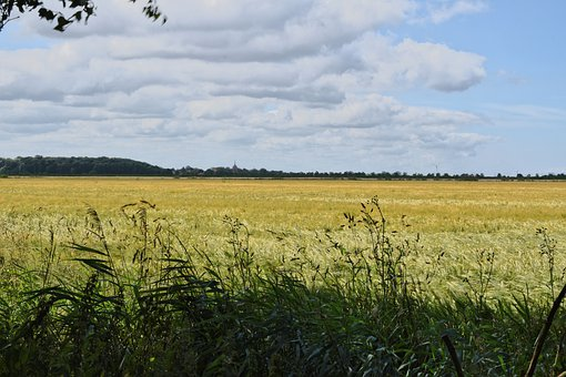 East Frisia, Field, Sky, Summer, Landscape, Sunny