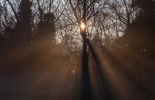 Sunrays, Sun Through Mist, Sun Through Branches